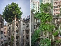 La naturaleza tomando la ciudad