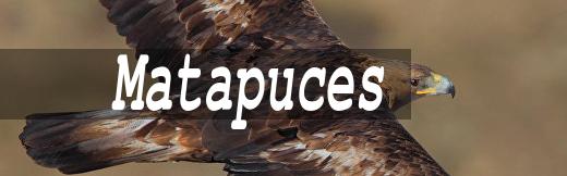Matapuces